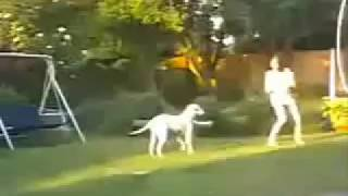 Funny videos, Dog catching girl and wants sex!