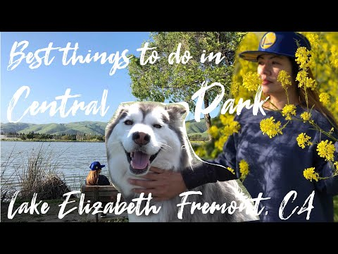 Best Things To Do In Central Park (Lake Elizabeth) | Fremont, California