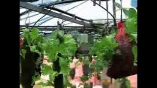 MGR Gardening in Oudtshoorn