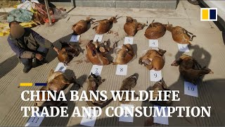 China Orders Complete Ban On Trade In Wildlife For Food To Combat Coronavirus Epidemic