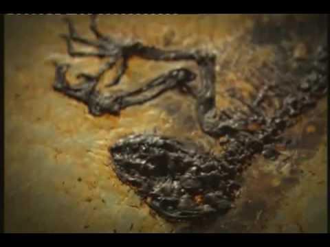 The Link - Darwinius Masillae - Ida Documentary - 2 of 6 BBC  (20 of 30) ORKUT Community and Profile