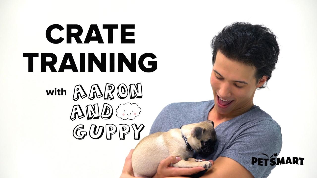 Dog Teaching Puppy Fear