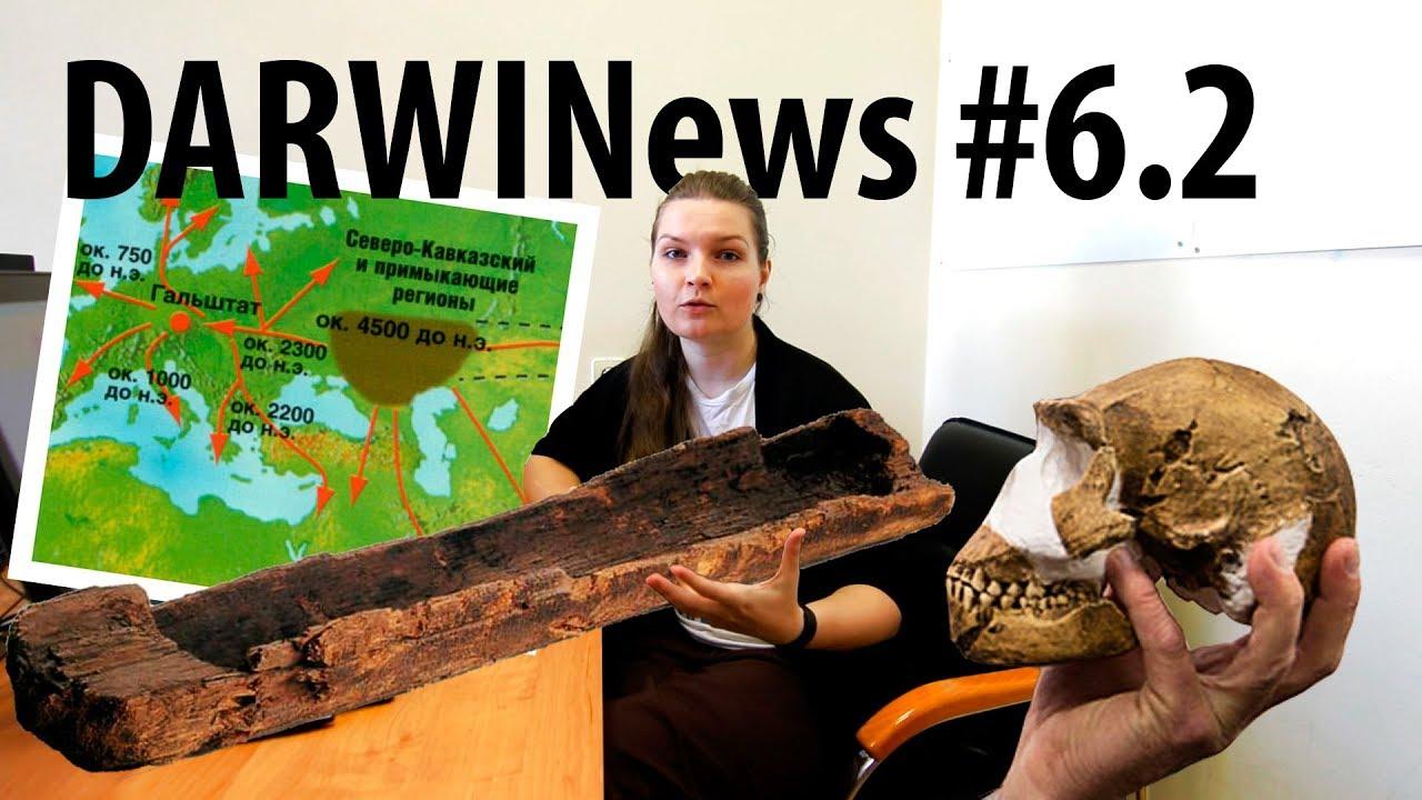 Происхождение европейцев, неандертальцы-мореплаватели и мозги наледи #DARWINews 6.2