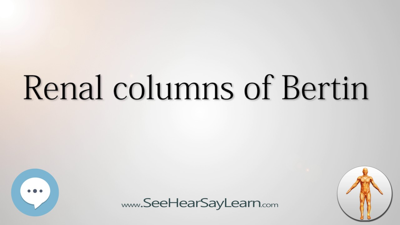 Renal Columns Of Bertin Anatomy Named After People Youtube