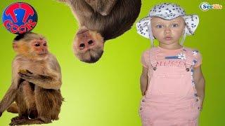 Кукла Штеффи и Ярослава на прогулке - Зоопарк Анталии. Кормим Животных Видео для детей Часть 2