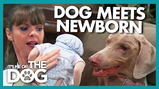 Can Dog With Bite History Be Trained Before Newborn Arrives? | It's Me or the Dog