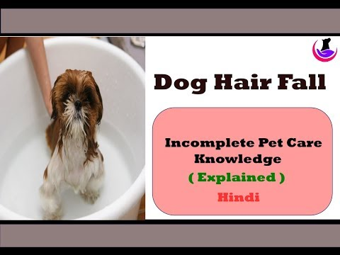 Dog Hair Fall : Incomplete Pet Care Knowledge ( Explained ) in Hindi