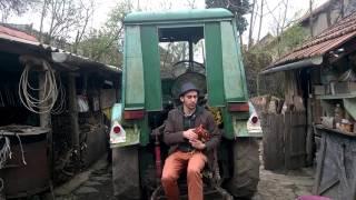 Tarnóczi Balázs: Szereti a tik a meggyet (in english)