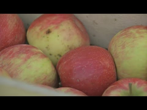 Why Are Honeycrisp Apples More Expensive?