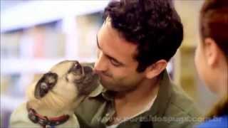"""Petsmart - """"inspired By Pets"""" -  Comercial De Tv - Propaganda Com Pug"""