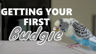 Getting Your First Budgie!