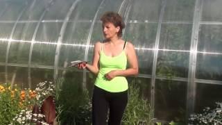 Обработка грунтовых томатов от фитофтороза и других грибковых заболеваний. Сайт sadovymir.ru