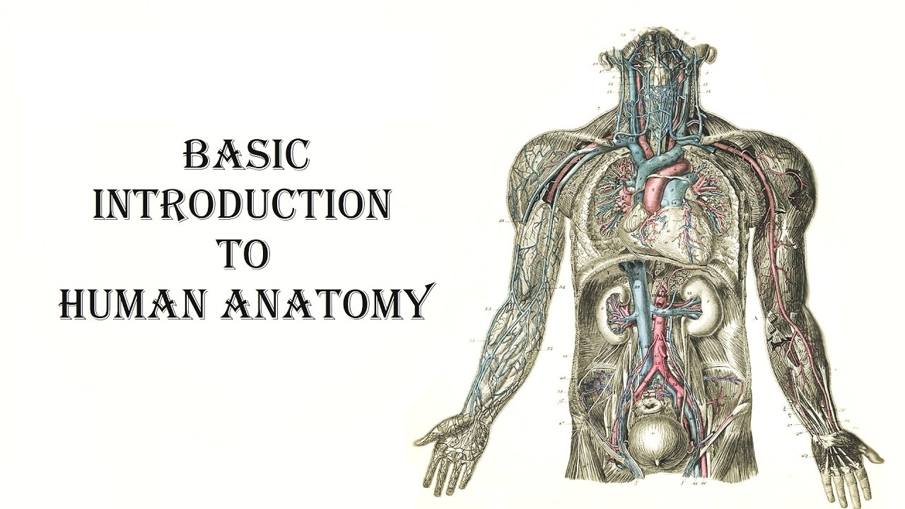 Chapter 1 1 Human Anatomy Introduction Youtube