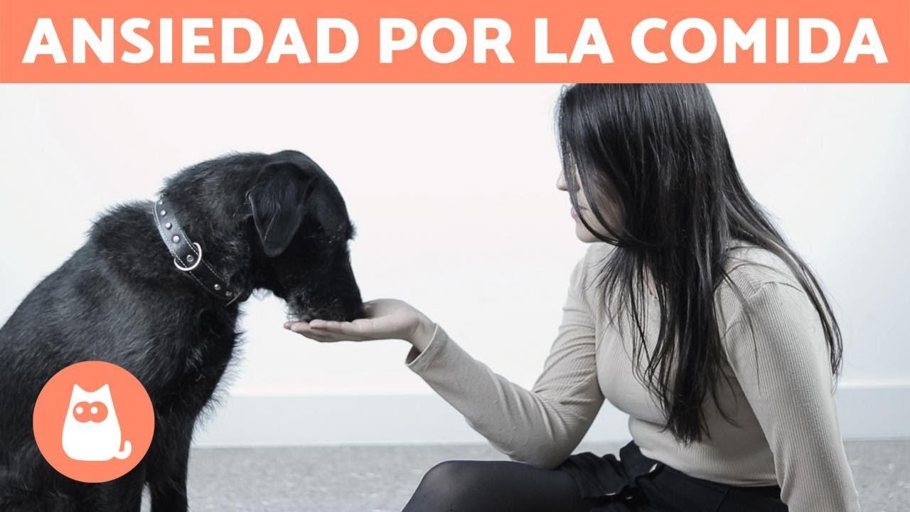 Cómo Enseñarle A Un Perro A Comer Despacio 8 Ejercicios Youtube