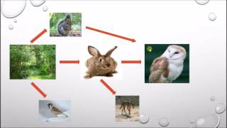 How to Read a Food Web