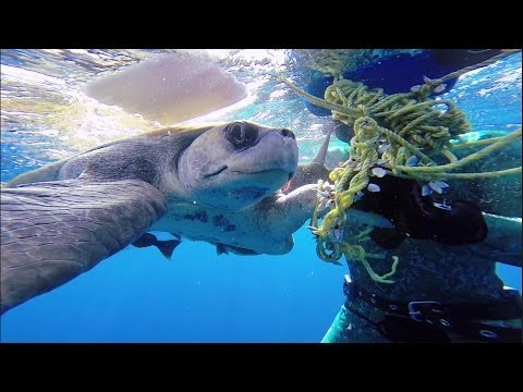 GoPro: Diver Saves Sea Turtle
