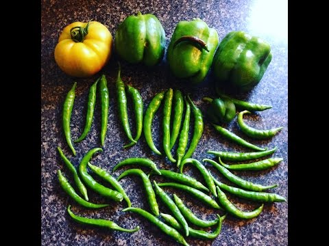 Pepper harvest, and garden walk around. (Toronto)