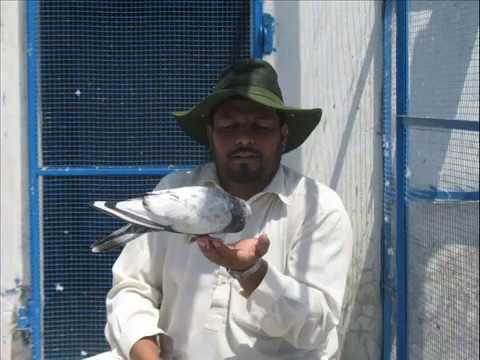 U 23 Vs Singapura pakistani pigeons Sard...