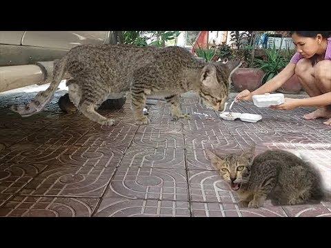 Homeless cat feeding, Lovely cat videos, Rice for cats, cat video, cat rice, gray cat videos, grey c