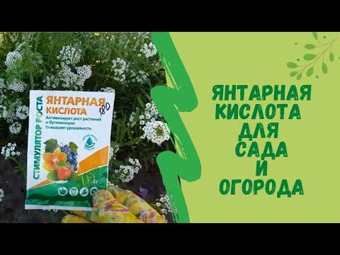 Янтарная кислота для сада и огорода
