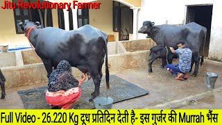 👍FULL Video - 26.220 Kg MILK Record of Murrah @ Subhash Gurjar Farm @ Delhi👌