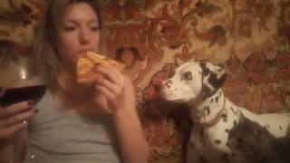 видео огонь! Собака далматин Финя и кот дворовый Фаня! Охота на еду!