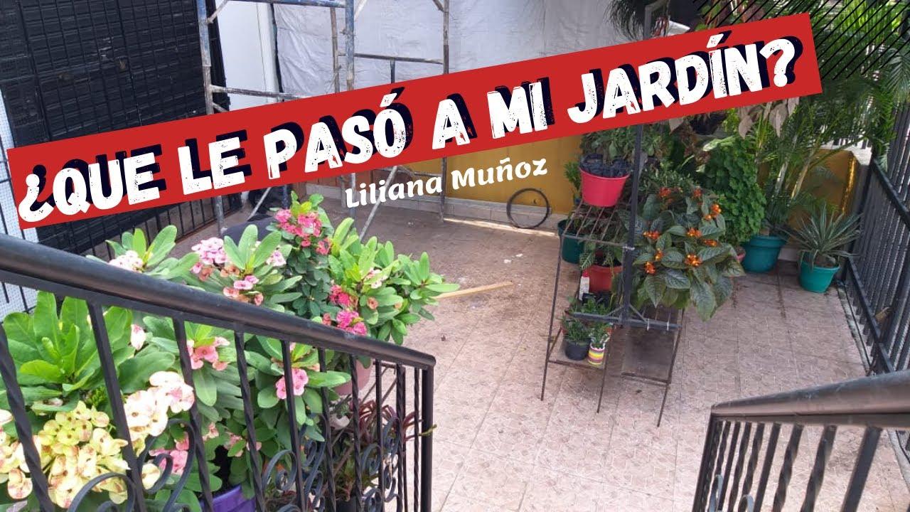 ¿QUE LE PASÓ A MI JARDÍN? Estamos remodelando / Liliana Muñoz
