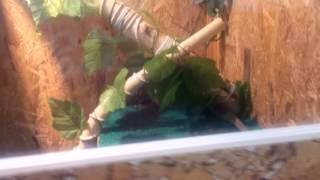 Мой террариум для игуаны