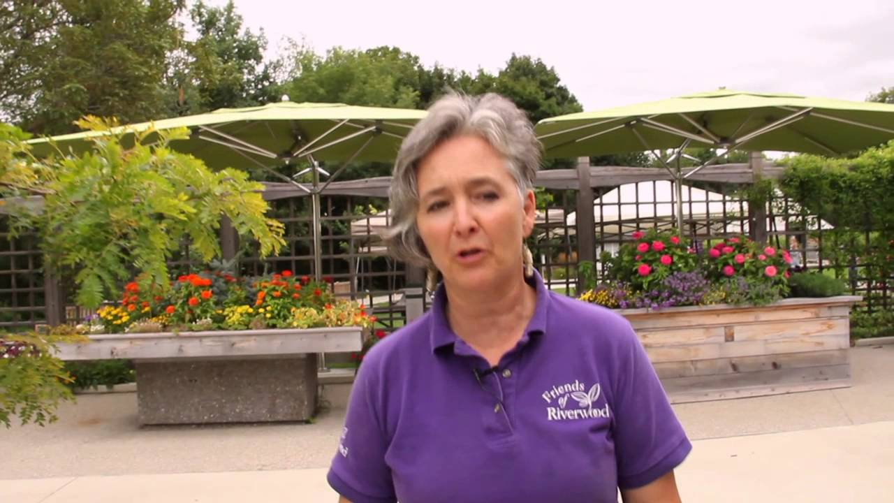Cultivating accessibility in your garden