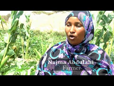 Best Documentary films  Somaliland Farming Investment Opportunities