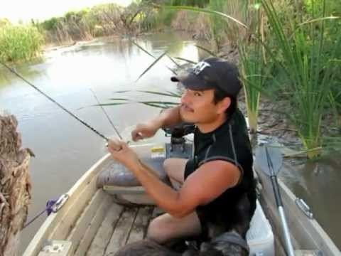 Video Catfish shrimp bait