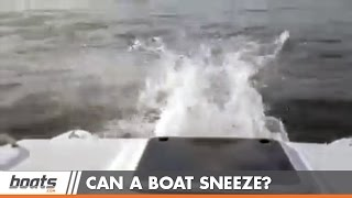 Boat Sneeze: This Little Kitty Has a Cold