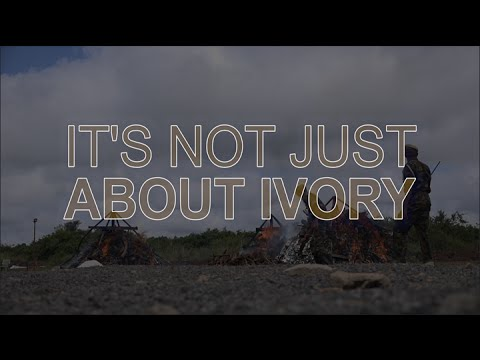 IT'S NOT JUST ABOUT IVORY