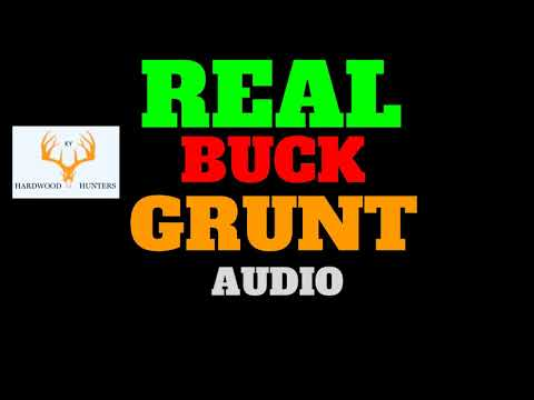 Deer Call : Use This While Hunting if Legal in Your State : Deer Grunting : Deer Sounds- Audio