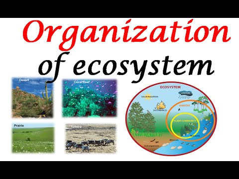 Ecosystem organization - YouTube