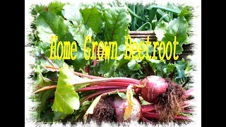 Grow Vegetables at Home  Raised Beds looking good.
