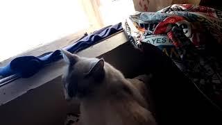 Кот греется на батарее