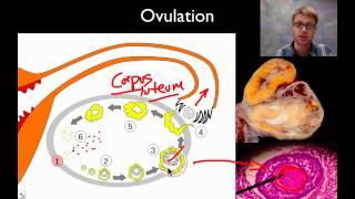 Popular Videos - Reproductive system & Biology