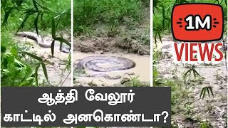 Anaconda in Vellore Village| Oneindia Tamil