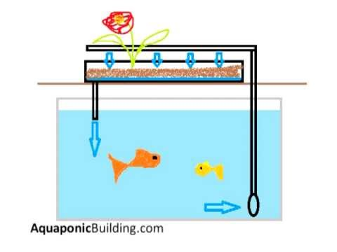 What is an aquaponic system? (Explained with images)