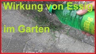 So Wirkt Essig Im Garten Auf Unkraut Das Passiert Wenn Du Im Garten Essig Benutzt