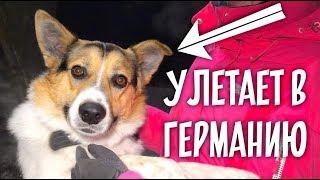 Новая жизнь Тузика. Немецкая семья для бездомной собаки из России.