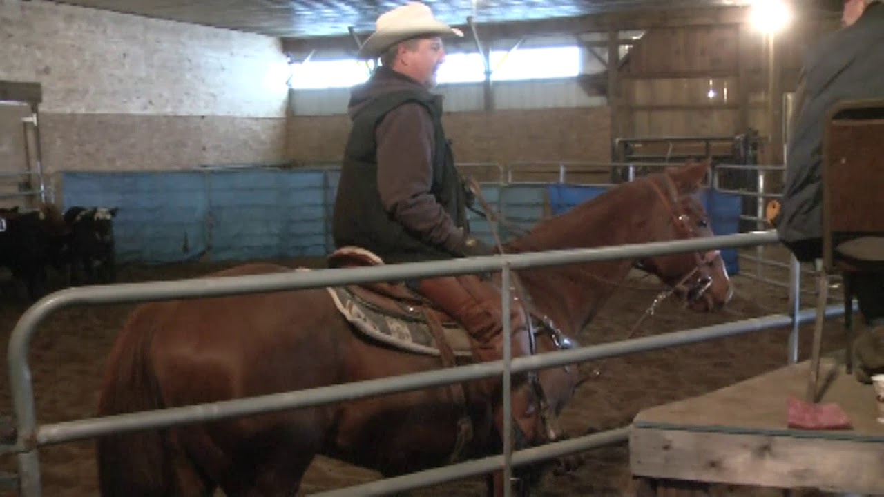 CACHE Stables Cattle Sorting part Four  11-17-12