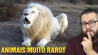 Você já viu um leão com OLHOS AZUIS? Animais raros que você nunca ouviu falar