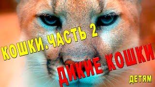 Дикие Кошки ч.2 Видео для Детей. [Детям TV]
