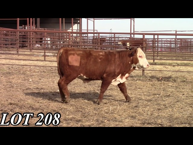Mead Angus Farms Lot 208