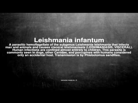 Medical vocabulary: What does Leishmania infantum mean