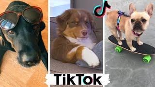 Funny Dogs of TikTok ~ Doggos Doing Funny Things TIK TOK ~ 2021