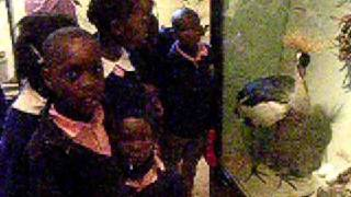 La unica children at national museum of Nairobi