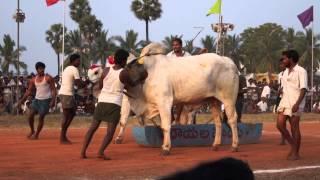 edla pandalu,bhimavaram